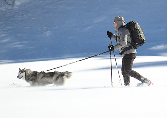 Man wearing black backpack snow shoeing with dog